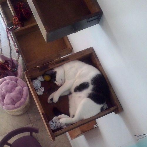 Il Gatto nel cassetto.