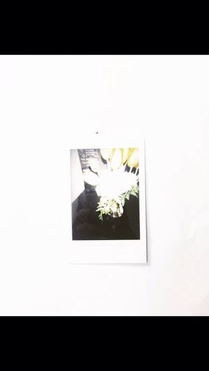 My first tulip 😁 Throwback Flowers Polaroid