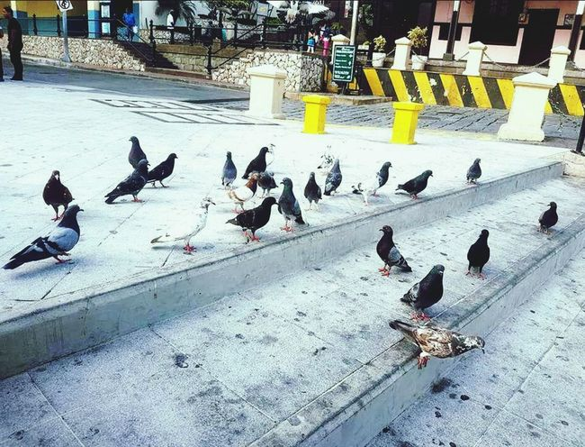 Bird Animal Themes High Angle View Outdoors Day Cold Temperature Large Group Of Animals Shadow City Animals In The Wild Snow Winter Nature No People Water Architecture