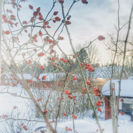 ?☕️?❤️☀️❤️ morning lovelies ? Hello World Eye Em Best Shots Vackra Dalarna Tadaa Community