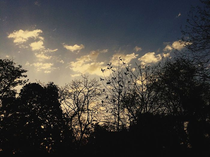 Forest Life♥ Fresh Air... Peaceful Chirpingbirds Birds On Branches Golden Skyline Sunrise And Clouds Tree Silhouette