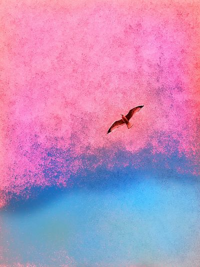 It is better to fly alone than with a flock that's headed in the wrong direction. Life Lessons Abstract Animal Themes Flying One Animal Bird Nature Animals In The Wild Pink Color No People Beauty In Nature Sea Water Outdoors Day Fine Art Photography Millennial Pink