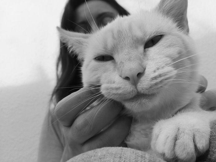 Woman Stroking Her Pet Cat