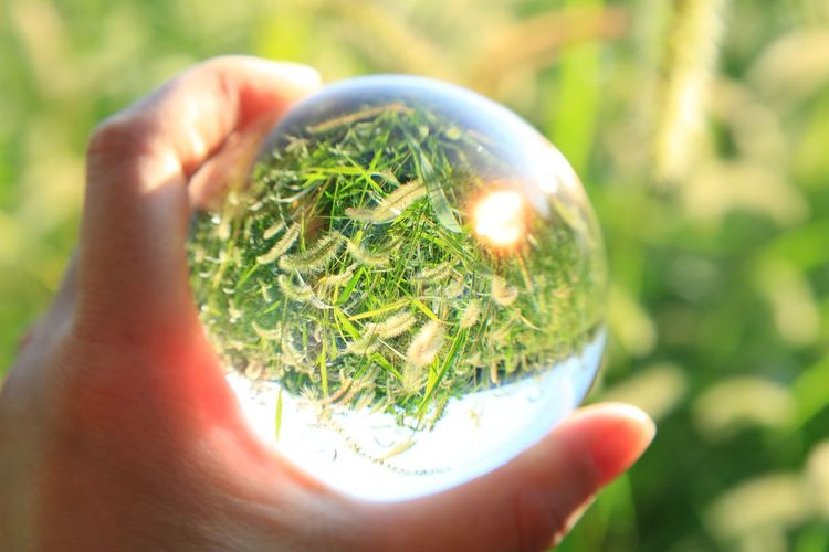 Cropped image of hand holding crystal ball against field