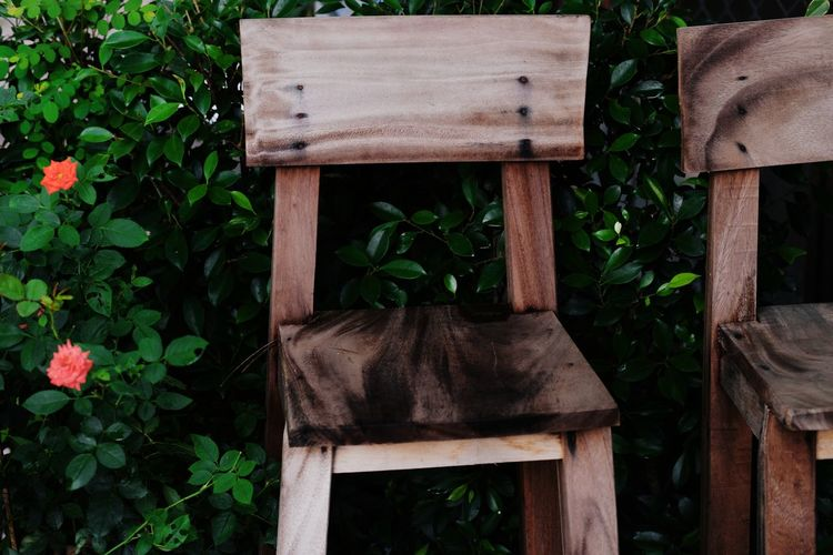 Wooden chairs by rose plant in back yard