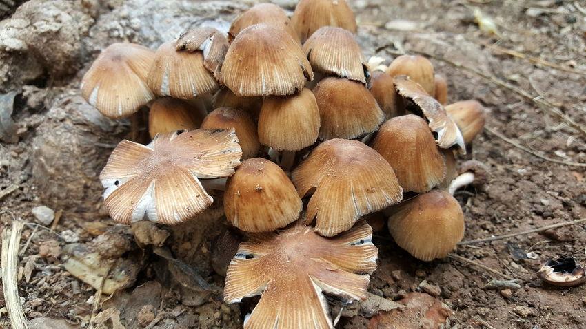Hongos  Fungus EyeEm Selects Outdoors Day Wood - Material No People Close-up Log Nature