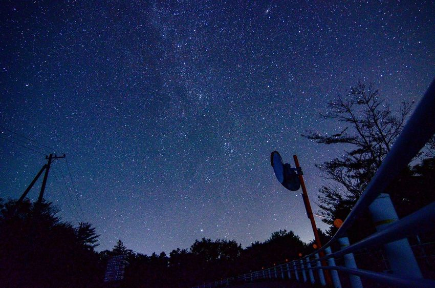 Landscape EyeEm Gallery EyeEm Best Shots Star - Space Space Astronomy Night Sky Tree Low Angle View Star Field Silhouette No People Star Galaxy