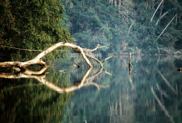 Beautiful relections in Challalàn Lake near Rurrenabaque in the Bolivian lowlands Beauty In Nature Bolivia Calm Day Forest Green Color Growth Idyllic Lake Landscape Nature No People Non-urban Scene Outdoors Plant Reflection Remote Scenics Standing Water Tranquil Scene Tranquility Tree Water