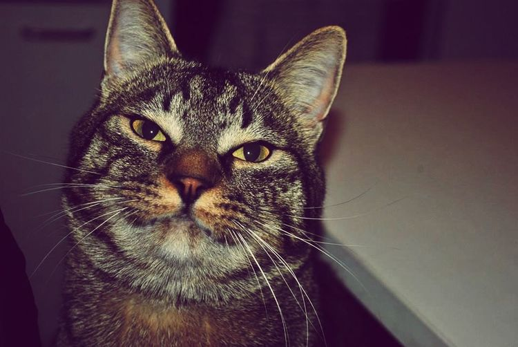 Pets Corner Stitch Mon Beau Chat Smile My Cat Cat Lovers Cheese! Catoftheday