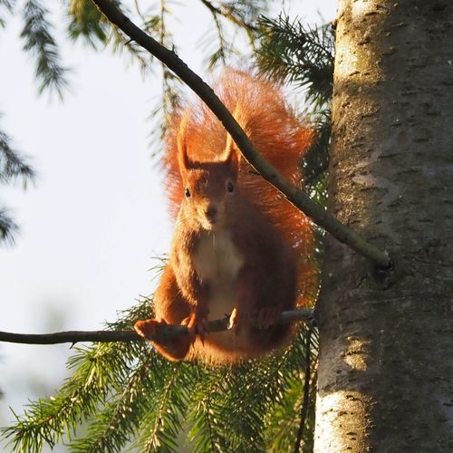 Low angle view of squirrel on tree against wall
