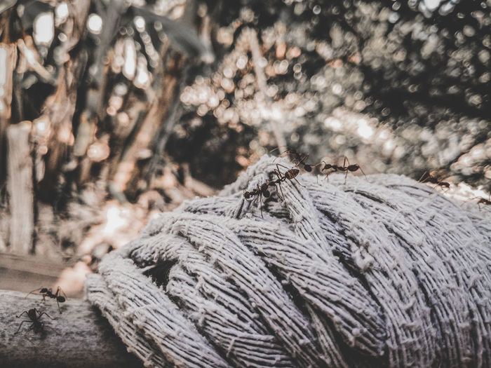 Close-up of rope tied on tree