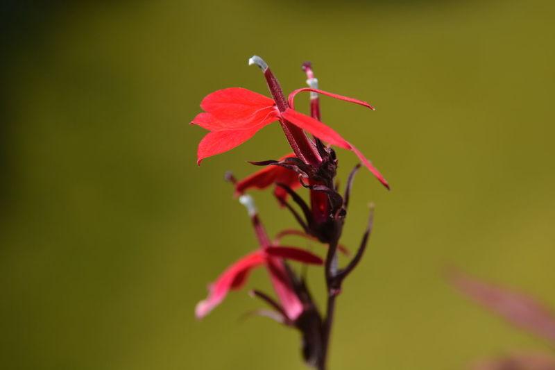 Outdoors Nopeople Fleur Rouge Nature Nikon Nikon D7100 Jpho06 EyeEmNewHere