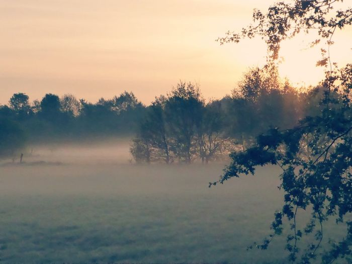 Good Morning🙋♀️happy friday Calming Views Simple Beauty MorningSunshine Fields Surrounded By Nature Bicycling Countrylife Cold In The Morning Foggy Morning Frühnebel Kissed By The Sun On My Way Home Lucky Me🦄 For My Friends😚 Beautiful Nature Tree Fog Forest Dawn Morning Sky Landscape Plant