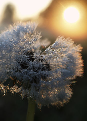 Animal Themes Beauty In Nature Close-up Cold Temperature Day Flower Flower Head Focus On Foreground Fragility Freshness Nature No People Outdoors Winter