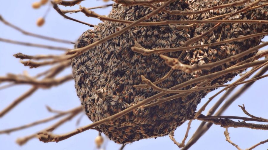 Low angle view of honeycomb on branch