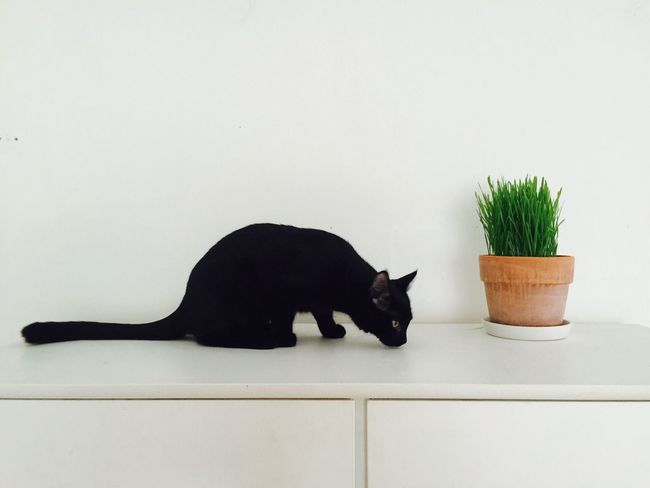 Kitten Black Cat Black Kitten Animal Grass Green White Wall