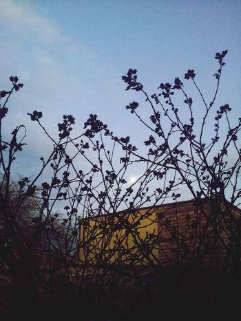 Tree Silhouette Sky Nature Expo Georgia