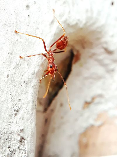 red ants EyeEm Selects Animal Leg Insect Spider Spider Web Close-up Ant Invertebrate Colony