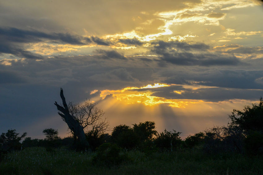 Safari in Kruger National Park, South Africa. Kruger Park National Park South Africa Wildlife & Nature Africa Beauty In Nature Cloud - Sky Dramatic Sky Kruger Krugernationalpark Krugerpark Landscape Nature Outdoors Safari Scenics Silhouette Sky Sunset Tranquil Scene Tranquility