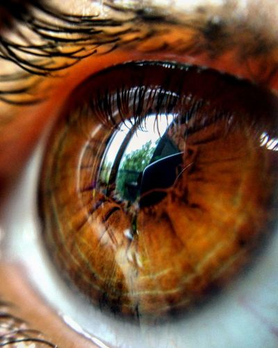 Closeup Eye Eyeshot EyeEmNewHere EyeEm Eyelashes چشم Myeye چشمای_خودم Oneeye Reflection Window Reflection Photography Blue Sky Greentrees