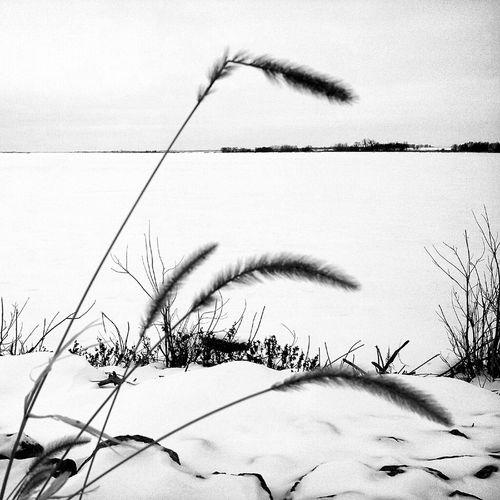 Black And White Marsh Lake Appleton, Minnesota