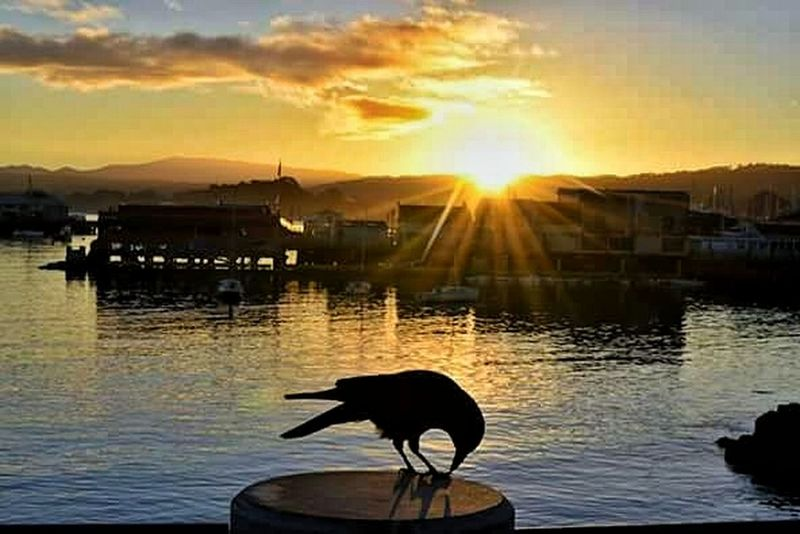 Sunrise Silhouette Monterey Ca I Live Where U Vacation Monterey Fishermanswharf Ocean Crow