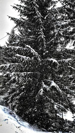 Editing....No People Day Sky Large Group Of Animals Outdoors Nature Close-up Falling Snowflake Falling Pinetrees Pinetrees🌲 Edited My Way Cold Temperature Winter Wonderland Wandering Around Winter Falling Snowwwwwww ❄❄❄❄❄❄❄❄❄❄❄❄❄ Falling Snowflakes Tree Artistic Eye Snow Nature Falling Snow