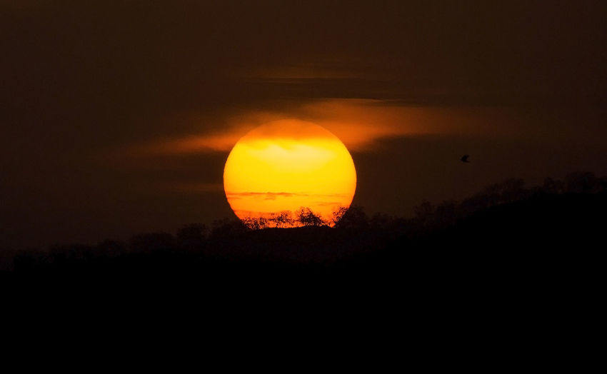 Sunset and bird EyeEmNewHere Beauty In Nature Bird Silouette Nature Orange Color Outdoors Sun Sunset Tranquil Scene