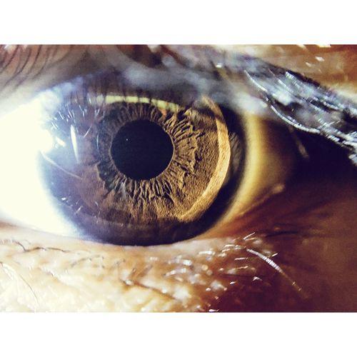 Eye Human Eye Eyelash Iris - Eye Close-up Macro
