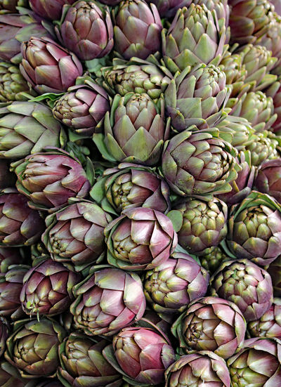 background of ripe artichokes for sale in the fruit and vegetable market Artichokes Background Food And Drink Freshnesss Fruits ♡ Genuine Brazil Images Green Color Grocery Shopping Roma Rome Vegetable Market Artichoke Artichoke Background Artichokes Artichokes Without Leafless Background Texture Backgrounds Foodstagram For Sale Group Italy Many Organic Vegetable Vegetable Garden Vegetables