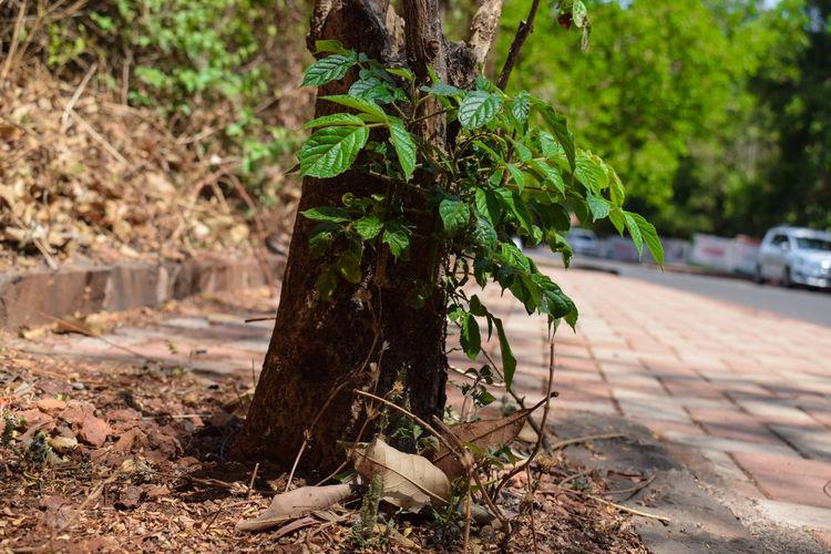 Close-up of tree on footpath