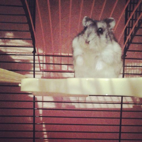 My Hamster Love My Life