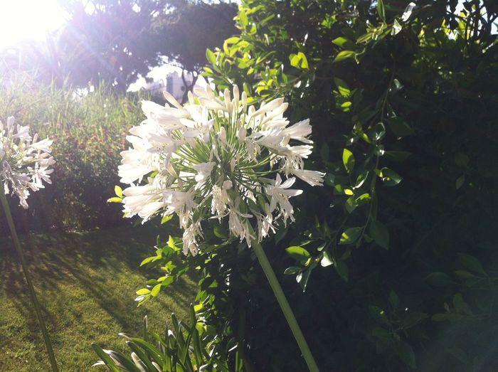Life Sun Flower Enjoying Life