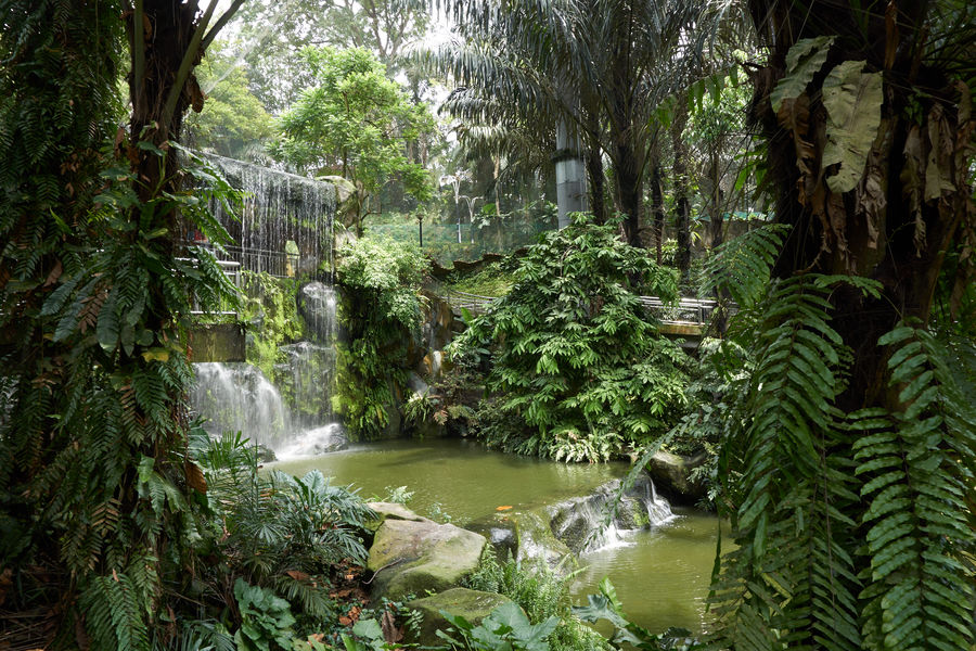 Beauty In Nature Day Forest Growth Motion Nature No People Outdoors Plant River Scenics Tree Urban Garden Water Waterfall