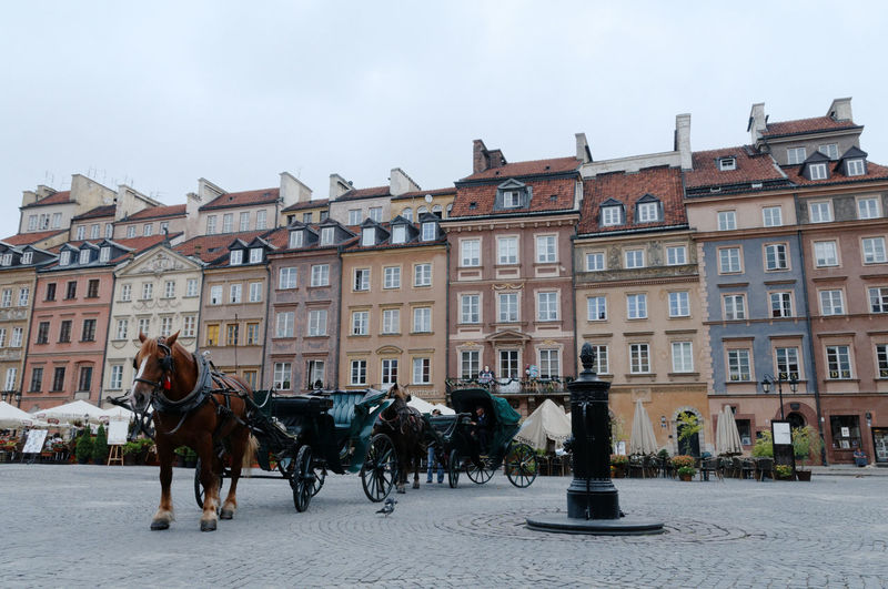 Horse Carts On Street By Buildings