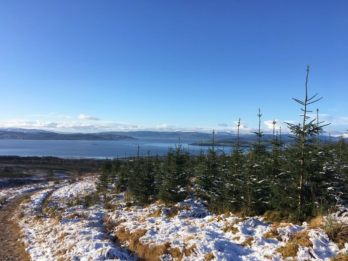 Helensburgh, Scotland Forrest Tree Nature Tranquility Beauty In Nature Sea Beach Tranquil Scene Scenics Blue No People Sky Outdoors Day Water Clear Sky Cold Temperature