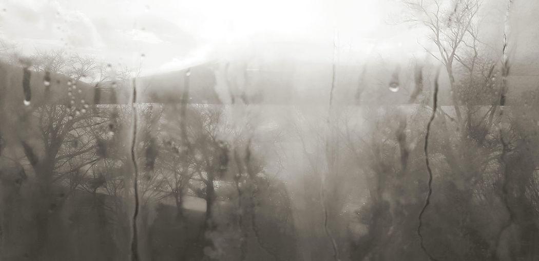 Trees seen through wet glass window during rainy season