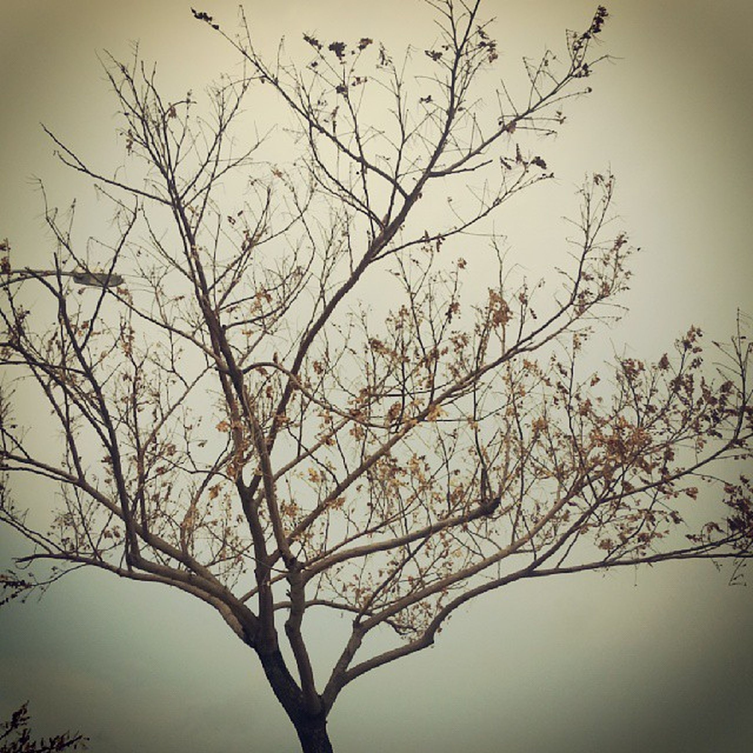 branch, bare tree, tree, low angle view, nature, tranquility, sky, beauty in nature, silhouette, growth, clear sky, scenics, outdoors, twig, no people, tree trunk, tranquil scene, day, dead plant, dusk