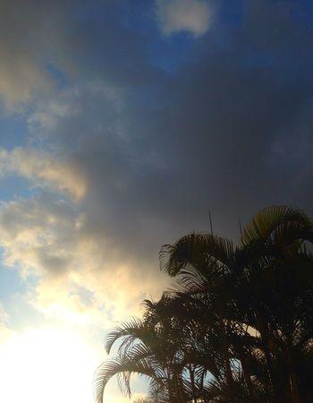 Sky Palm Tree Tree Cloud - Sky Nature Beauty In Nature