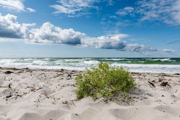 Deutschland Himmel Meer Ostsee Pflanze  Strand Ufer Weststrand Wolken Detail Horizont  Keine Menschen Natur Sand Sonnig Tag Wellen