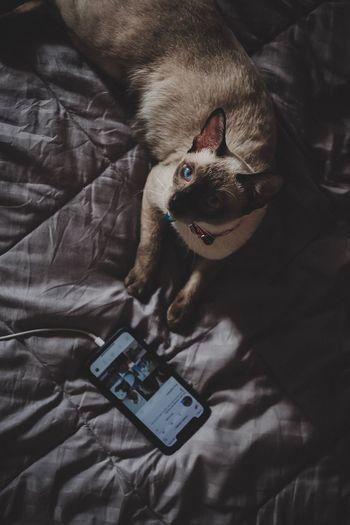 A social cat