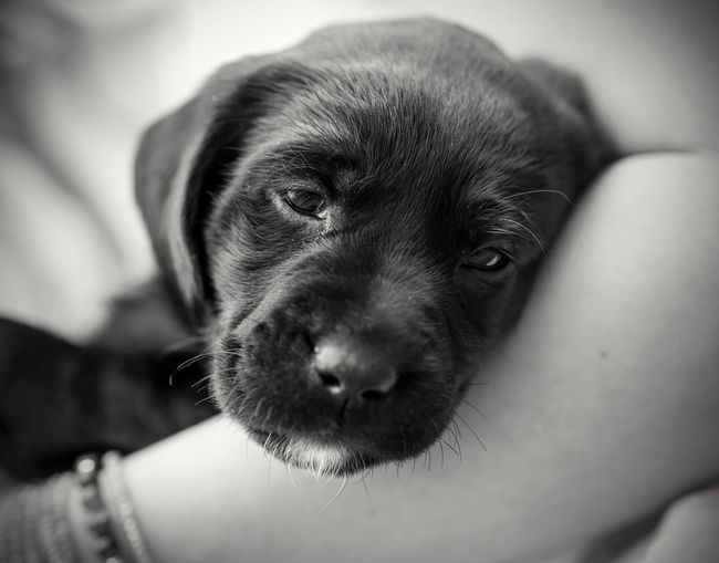 Close-Up Of Puppy