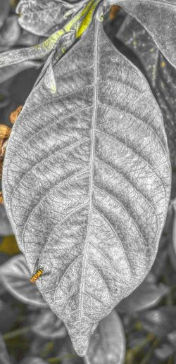 Taking Photos Check This Out Gold Silver  Leaf Leaves EyeEm Nature Lover EyeEm Gallery EyeEm Playing With Filters Photo Editing Photo Shop Nature EyeEm Best Edits Bug Plant Edited Fliters