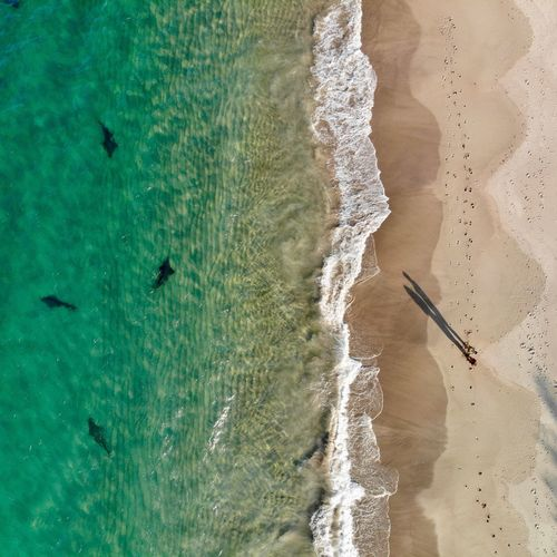 Sharks by the shoreline Shark Attack Sharks Nature Photography Beach Photography Beautiful Mavic Air Aerial Shot Sharks Australia Water Beach Land Sand Sea High Angle View Nature Tranquil Scene Scenics - Nature Tranquility Day Sunlight Motion Beauty In Nature