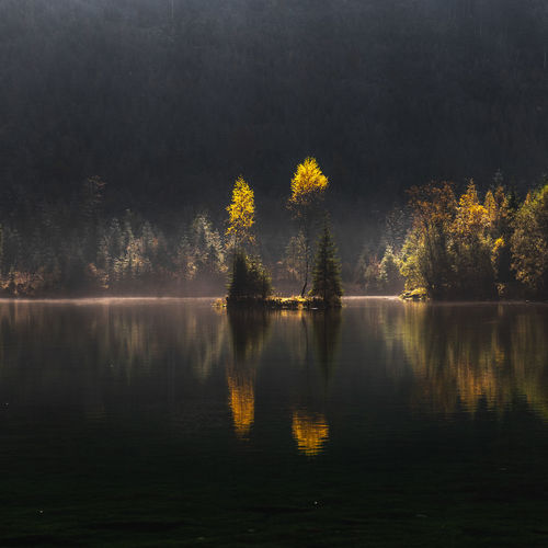 Reflection Water Tree Lake Tranquility Plant Beauty In Nature Tranquil Scene Nature Scenics - Nature No People Forest Autumn Outdoors Sky Day Land Waterfront Landscape Reflection Lake Yellow Autumn Fall Nature Lake View