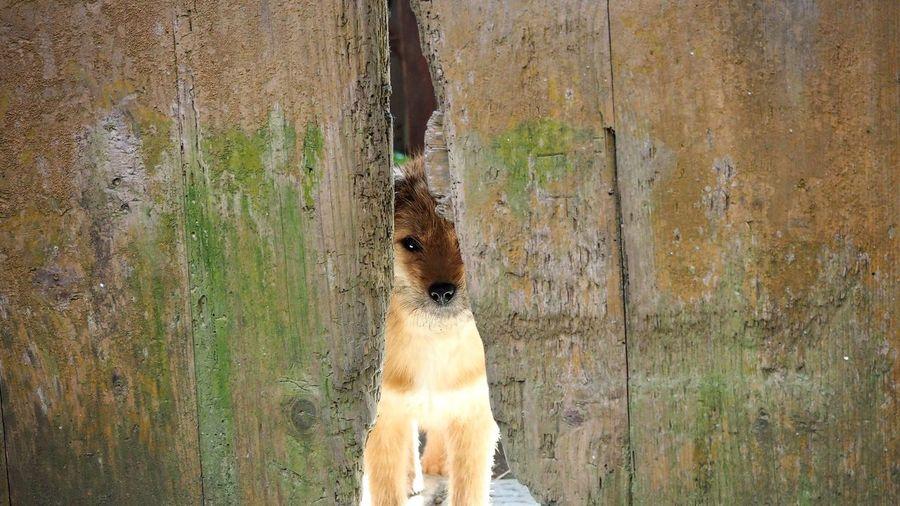 Animal Themes Dog Dogie Dogs Dogs Of EyeEm Dog❤ Mammal One Animal Pet Pets Are Family DogieLW Dogeyes DogEyeEm EyeEm Nature Lover EyeEm Gallery Eyeemphotography EyeEm Best Shots EyeEmMalaysia EyeEm Animal Eye Animal Head