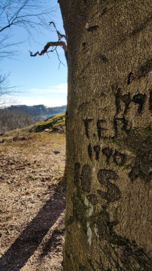 Bare Tree Beauty In Nature Carved In Wood Day Field Fredriksten Fortress Halden, Norway Landscape Nature No People Non-urban Scene Outdoors Remote Scenics Shadow Sky Sunlight Text Textured  Tranquil Scene Tranquility Tree Tree Trunk
