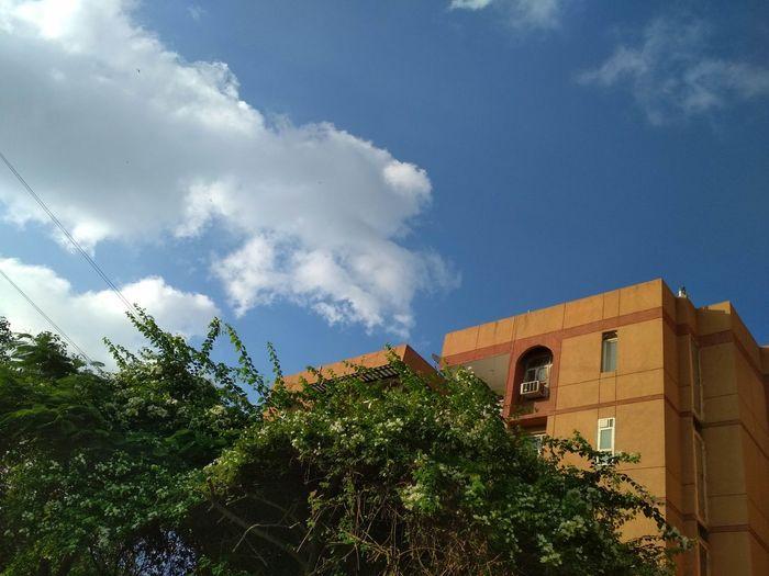 open sky Tree