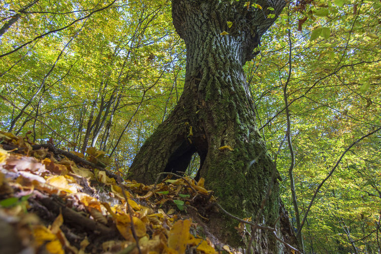 Tree Plant Forest Tree Trunk Trunk Growth Land Nature Plant Part Leaf Tranquility Beauty In Nature Day WoodLand No People Outdoors Green Color Branch Autumn Foliage Change Leaves Belarus Nature Belarus Forest Perspectives on Nature