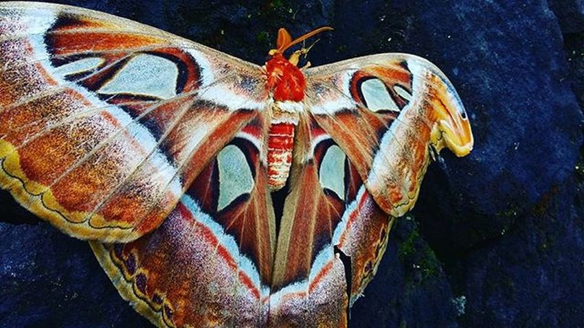By Accident . . . . Idphotography Butterfly Jogja Vscocam Mobilephotography Indonesia_photography Photographers Photojournalism Serikat_fi